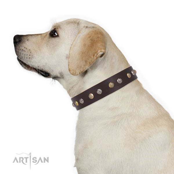 Labrador inimitable full grain genuine leather dog collar with adornments