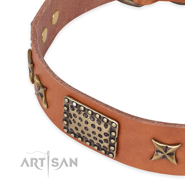 Perfectly Oiled Leather Dog Collar