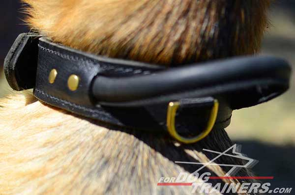 Leather Handle on Leather Training German Shepherd Collar Protection