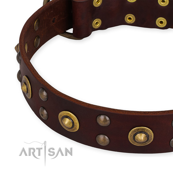 Brown leather dog collar with rustless studs