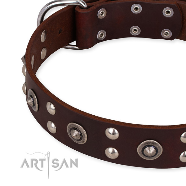 Brown leather dog collar with riveted decorations