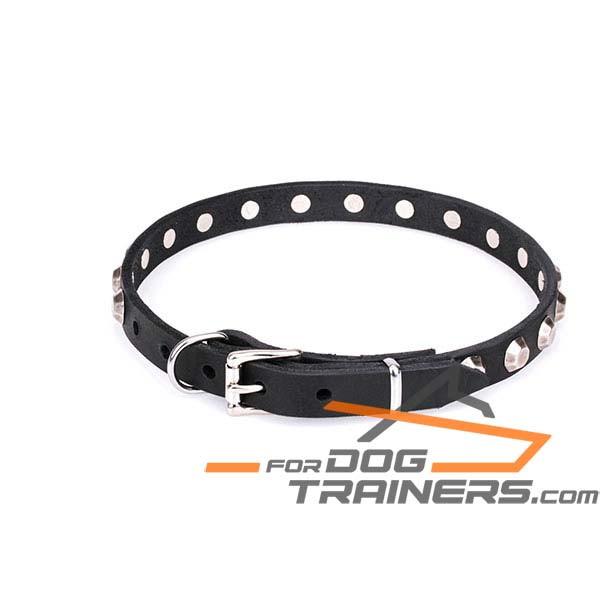 Buckled leather dog collar