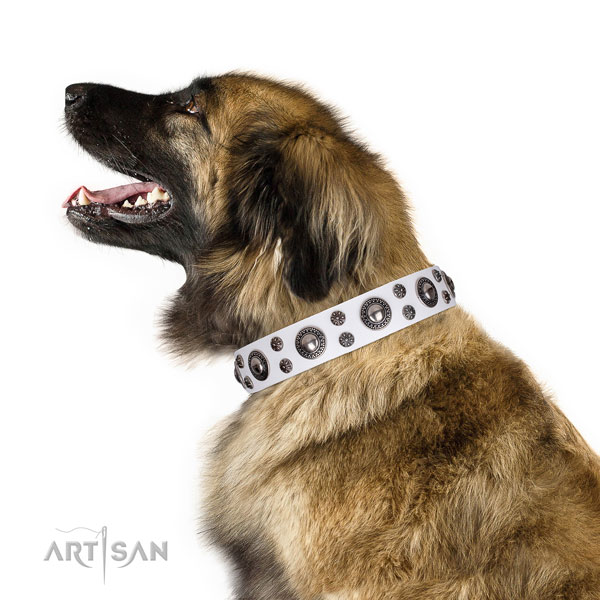 Leonberger fine quality genuine leather dog collar with studs