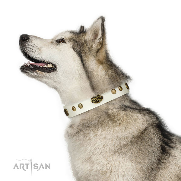Malamute walking dog collar of significant quality leather