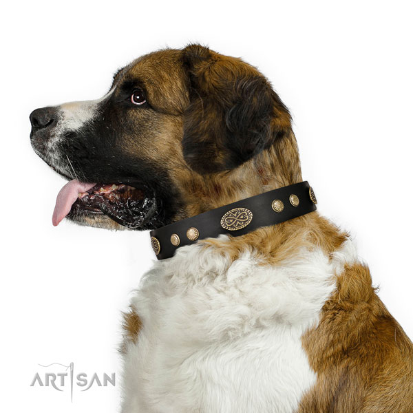 Moscow Watchdog daily use dog collar of remarkable quality natural leather