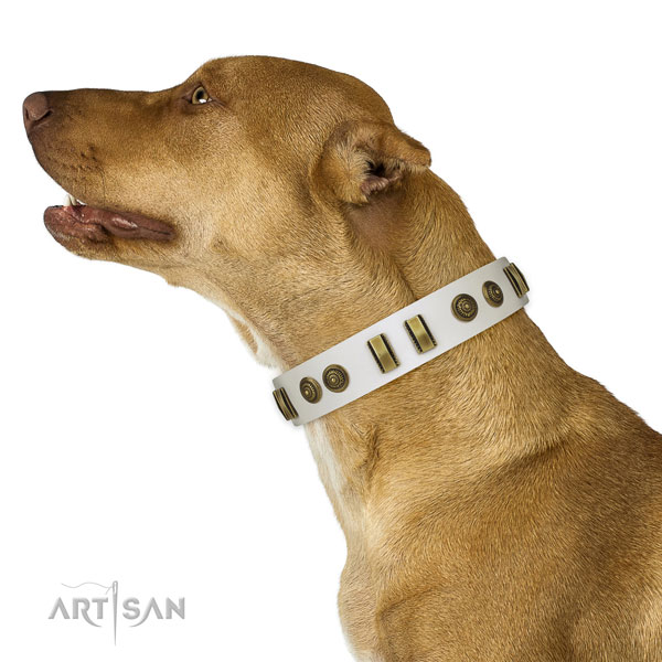 Pitbull fancy walking dog collar of fine quality genuine leather