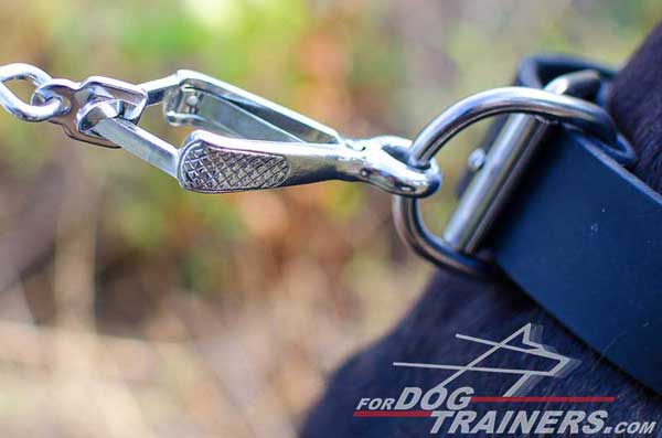 Silver-Like Nickel Plated D-Ring on Leather Pitbull Collar