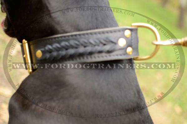 Securely riveted 2 ply leather Pitbull collar with brass hardware