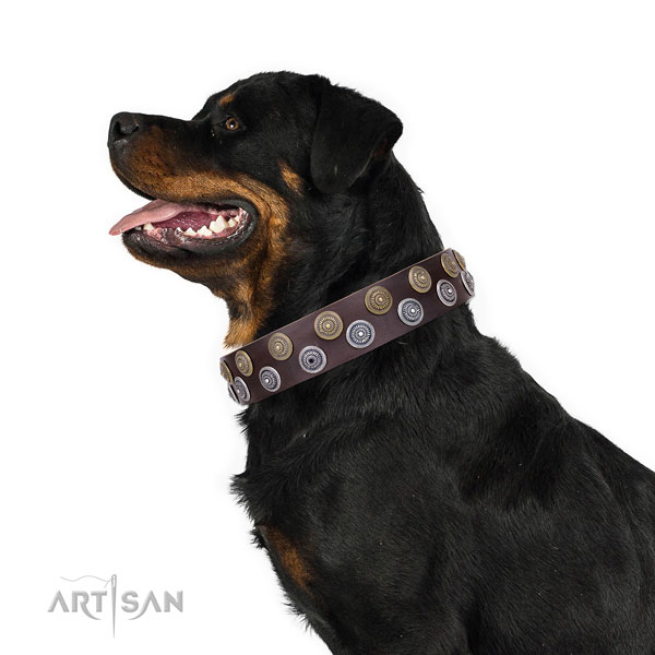 Rottweiler fashionable natural genuine leather dog collar with embellishments