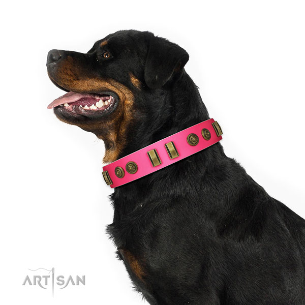Rottweiler stylish walking dog collar of incredible quality genuine leather
