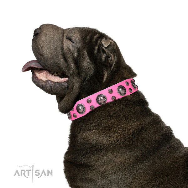 Shar Pei adjustable full grain genuine leather dog collar with embellishments