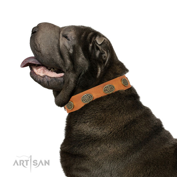 Shar Pei daily use dog collar of designer genuine leather