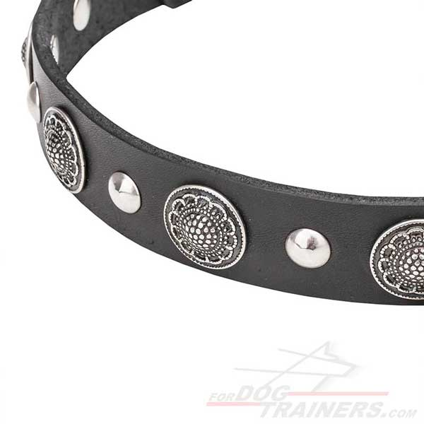 Leather Dog Collar with Studs and Conchos
