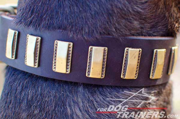 Small Brass Plates on Leather Pitbull Collar