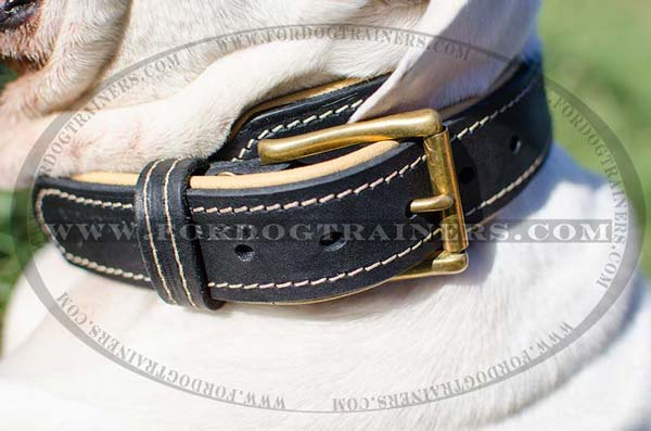 D-Ring on Dog Collar Leather for Training