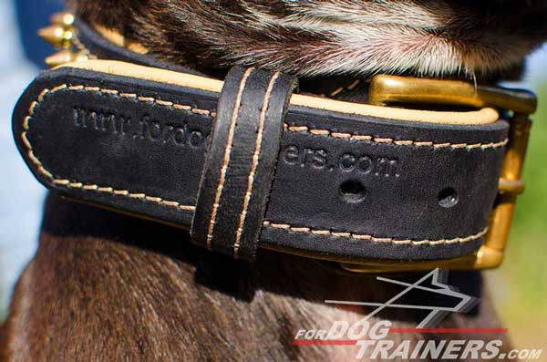 Strong Buckle with Tip Fixator on Leather Pitbull Collar