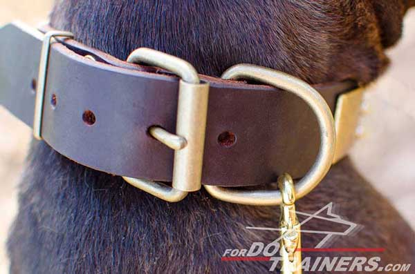 Brass Rustproof Buckle on Pitbull Collar