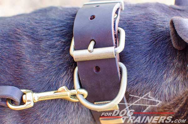 Leather Pitbull Collar with Durable Easy-to-Use Buckle