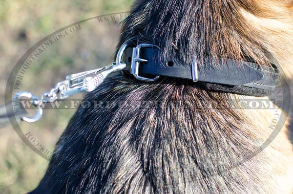 Padded Leather Dog Collar for Training Sessions