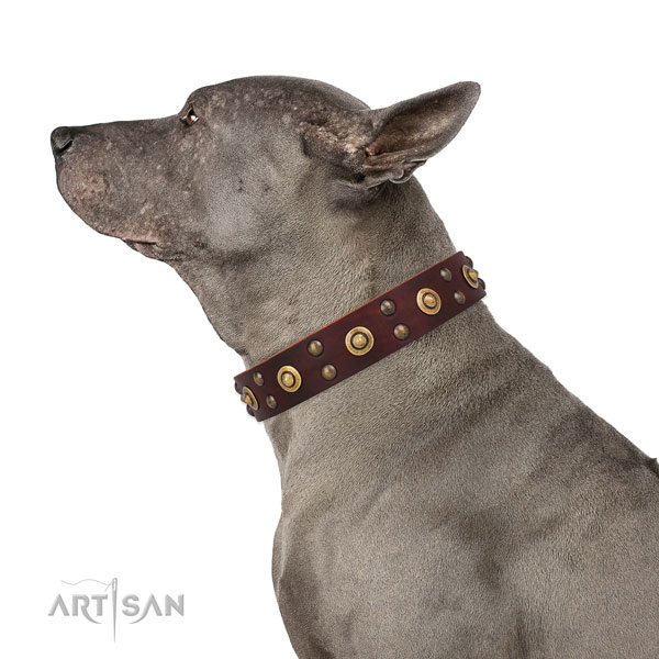 Thai Ridgeback everyday walking dog collar of exquisite quality leather