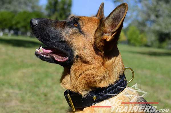 Awesome Dog Collar Fully Leather High Quality for German Shepherd