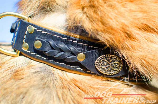 Braided Leather Elements And Brass Gorgeous Plates As Decoration of Dog Collar