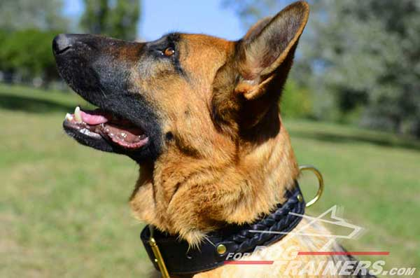 GSD Leather Collar Fantastic Design Meant for A Variety of Settings