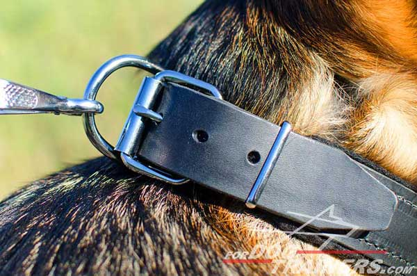 Durable Nickel Plated Ring for Leash Clipping