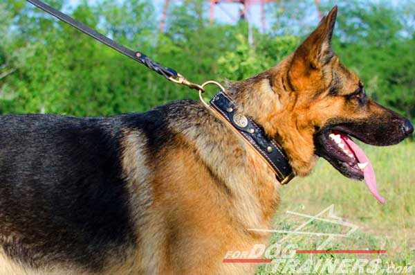 Beautiful Walking Dog Collar Leather for German Shepherd