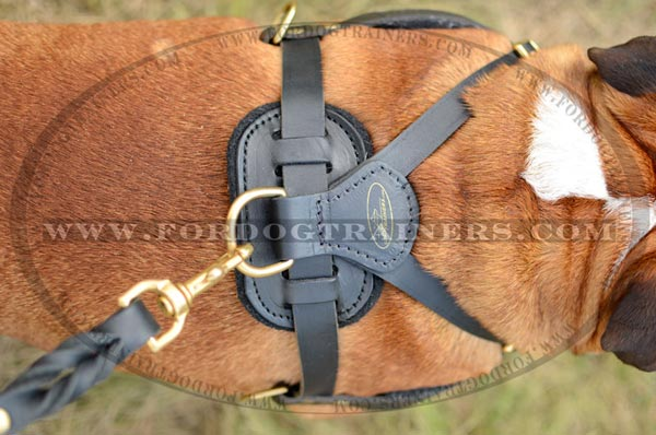 Sturdy Brass Hardware of Leather English Bulldog Harness