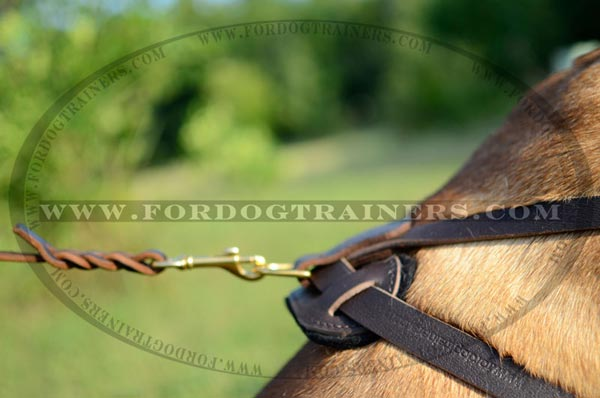 Sturdy D-Ring of Leather Bullmastiff Harness