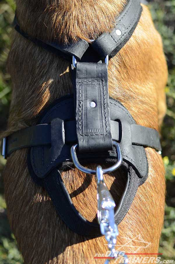 Nickel Plated Fittings of Leather Belgian Malinois Harness