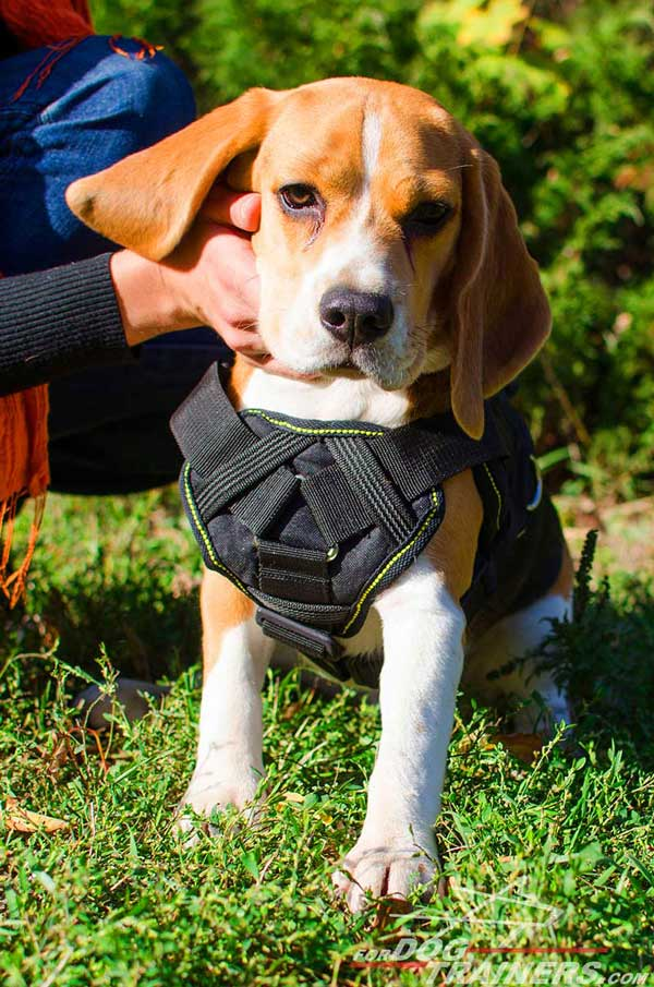 Beagle Nylon Harness Light in Weight