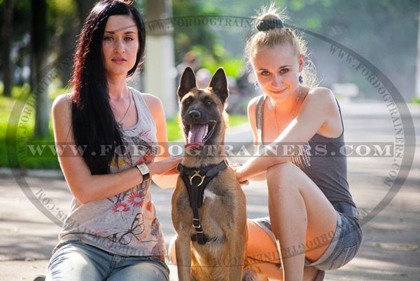Training Leather Belgian Malinois Harness