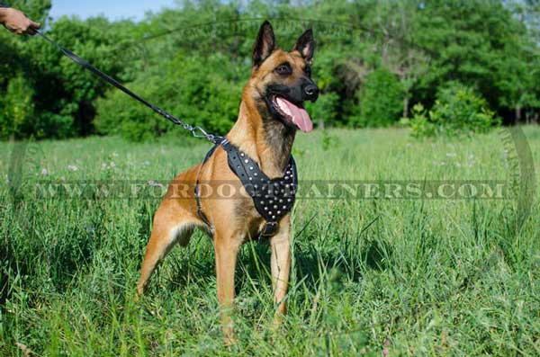 Reliable Belgian Malinois Harness with Adjustable Straps