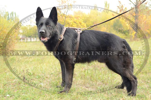 Multifunctional Leather Dog Harness for German Shepherd Training
