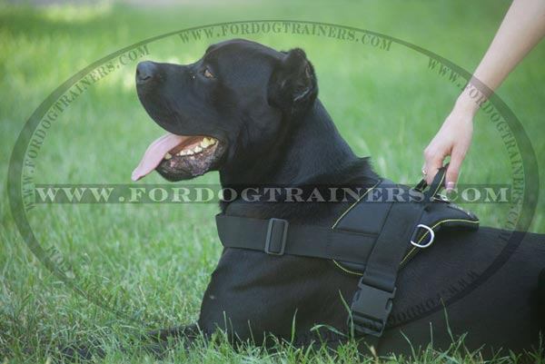 Lightweight Pulling and Tracking Harness for Large Dogs