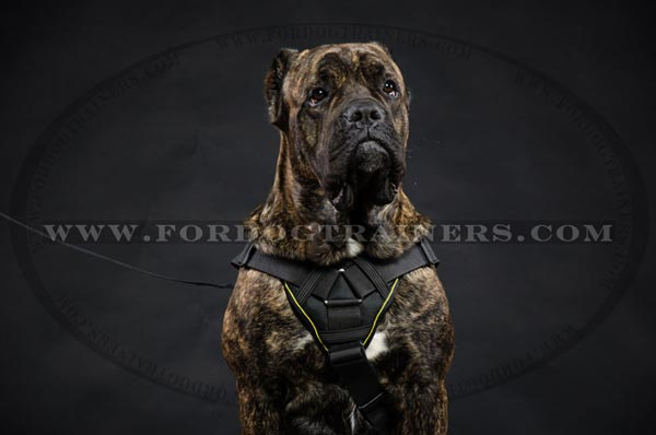 Nylon Cane Corso Harness Multifunctional