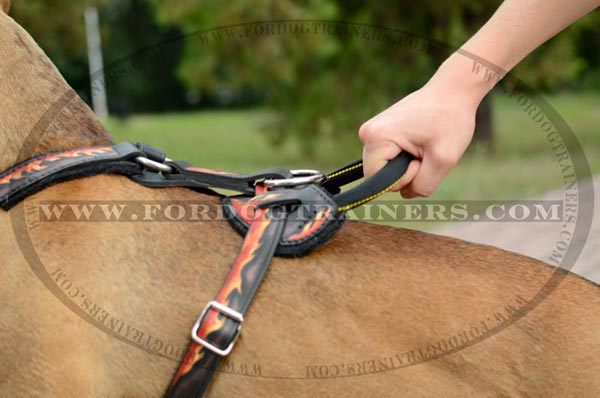 Comfortable Handle on Pitbull Harness
