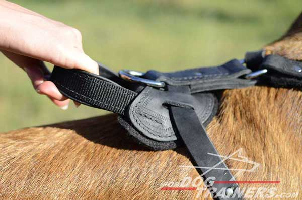 Better Control Handle of Leather Belgian Malinois Harness