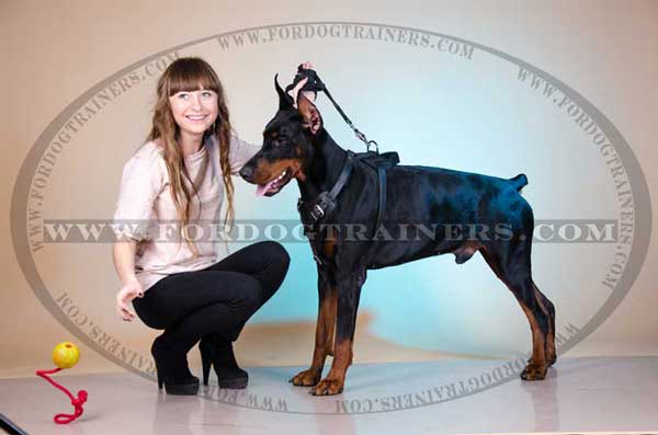 Leather Doberman Harness for training and walking