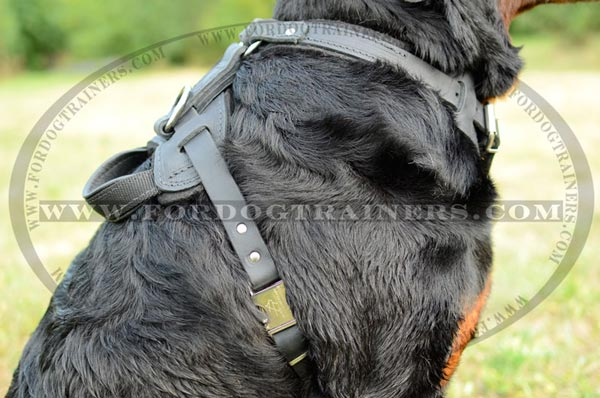 Dog harness easy to put on - off