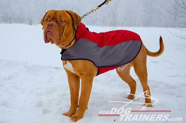 Dogue-de-Bordeaux nylon winter coat