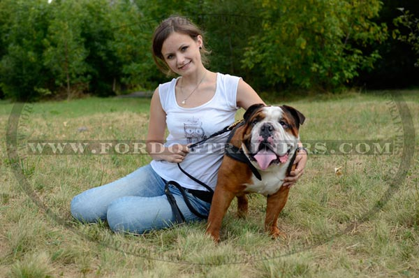Leather English Bulldog Harness for tracking