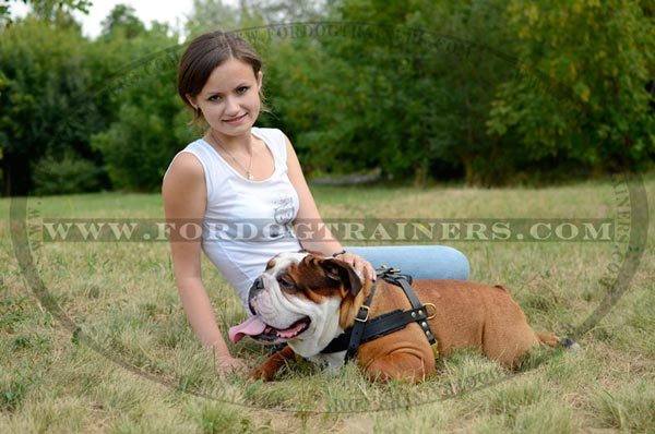 Leather English Bulldog Harness
