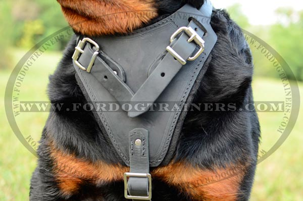 Safe chest plate - padded on the harness