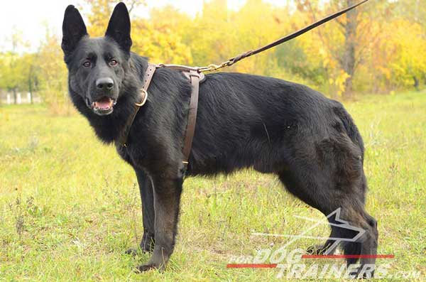 Durable Leather German Shepherd Harness Brass Fittings Adjustable
