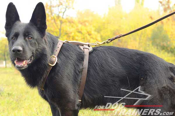 Leather Walking German Shepherd Harness Brass Fittings