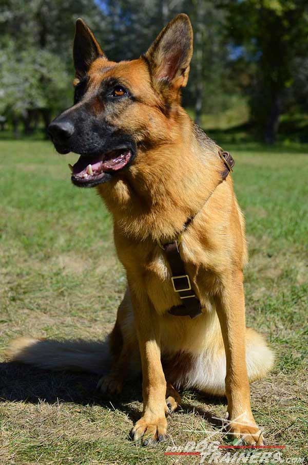 Leather Light German Shepherd Harness