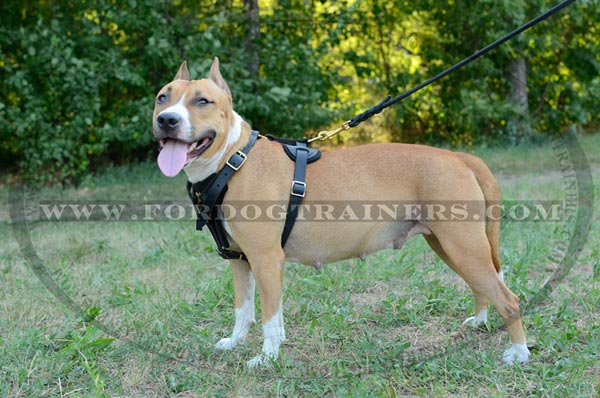 Durable Tracking Staffordshire Terrier Harness Leather